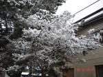 copacel nins