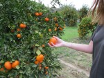 un pic din mine si multe portocale