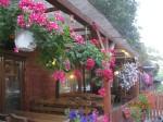 explozie de flori pe terasa