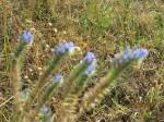 iarba cu flori
