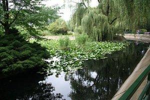 lacul plin de verdeata