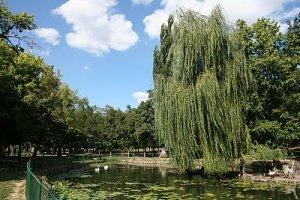 salcie parcul romanescu